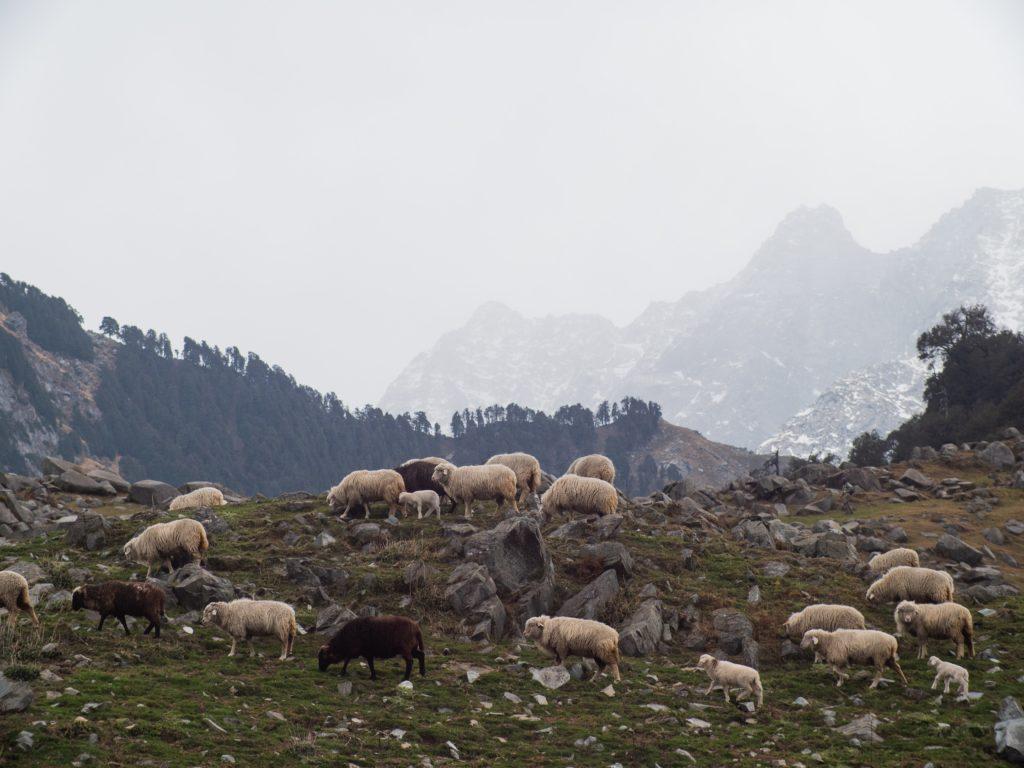 """""""Graue Schafe"""" verhalten sich anders als der Rest und möchten daher auch keine standardisierten Empfehlungen."""